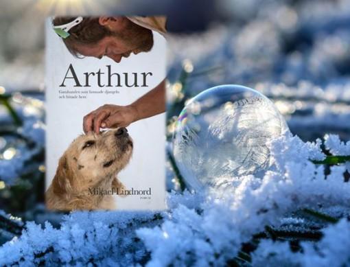 gatuhunden_-arthur