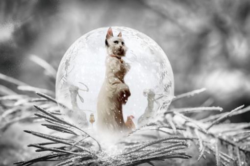 Den vita katten Fröken Bengalore från bokomslaget Vinterns blommor av Félix Delep och Xavier Dorison inuti en iskula på en frosttäckt grangren.
